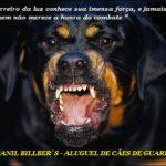 rottweiler-canil-billbers